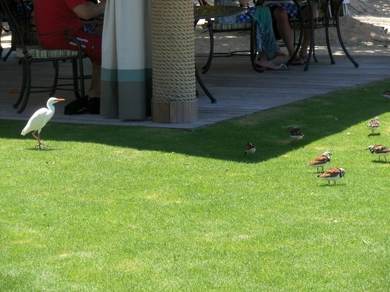 Sandals Whitehouse European Village and Spa: Cute birds at Bluefield's