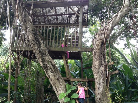 Kilauea, HI: tree house