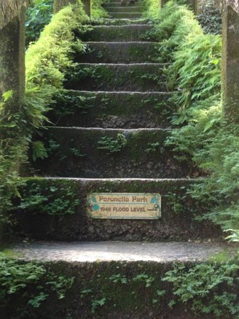 Mena Creek, Avustralya: Stairway