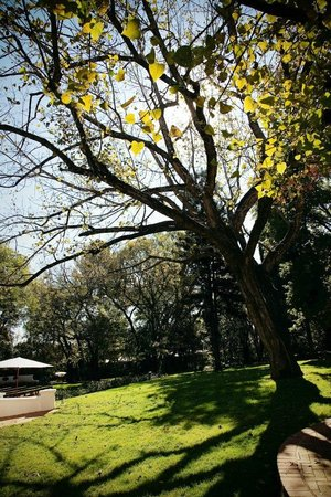 Centurion, South Africa: Snap shot of Kleinkaap's garden during winter