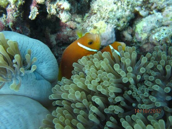 Kuramathi Island Resort: Nemo :)