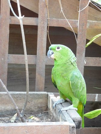 West Bay Lodge: One of the parrots in the property