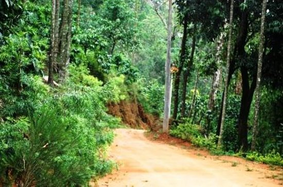 Vythiri, India: Approach road