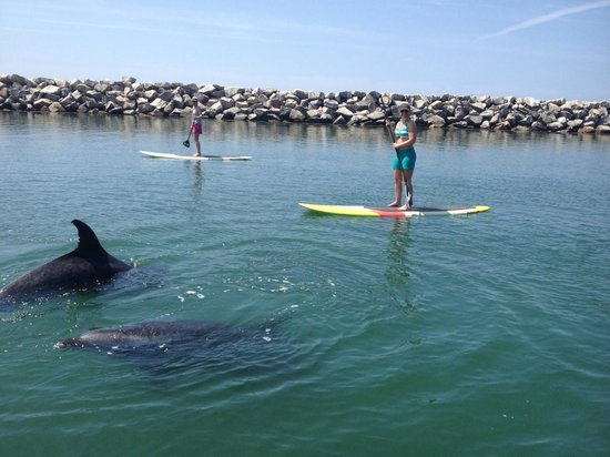 Stand Up Paddleboarding In Laguna Beach Picture Of Sup Fitness Laguna Dana Point Tripadvisor