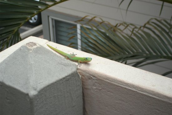 Days Inn Maui Oceanfront : Friendly visitor on ledge outside our room