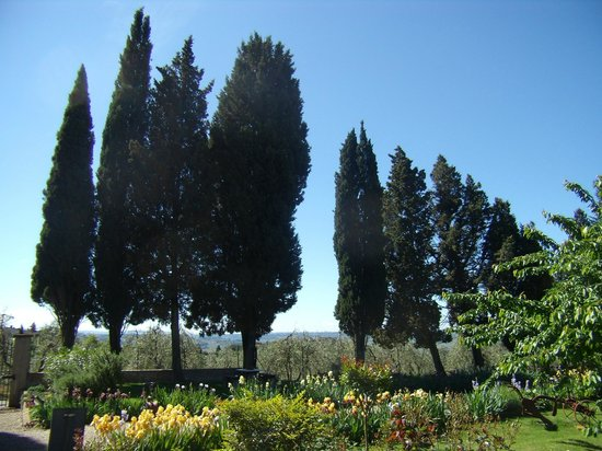 Scandicci, Italy: Garden with hight old cypresses