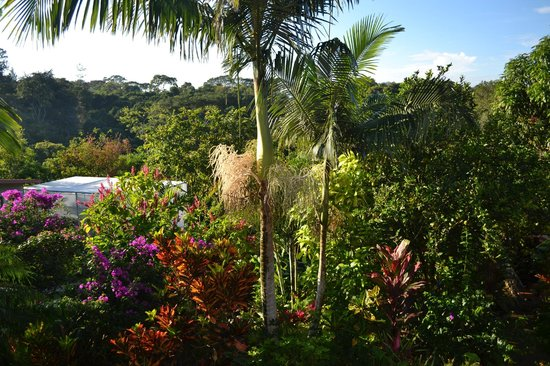 Atenas, Costa Rica: Garden with view of organic greenhouse