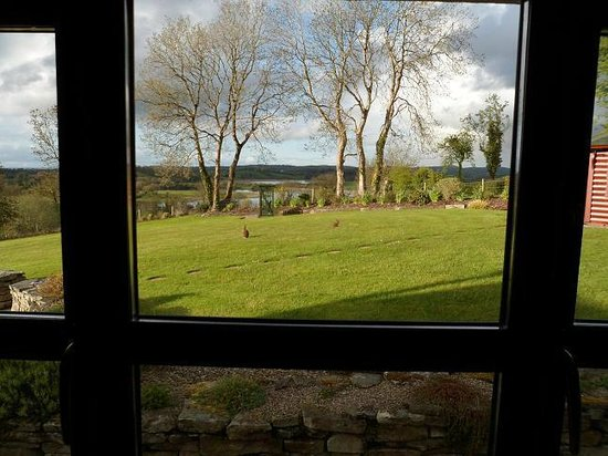 Willowbank House: View From Our Room