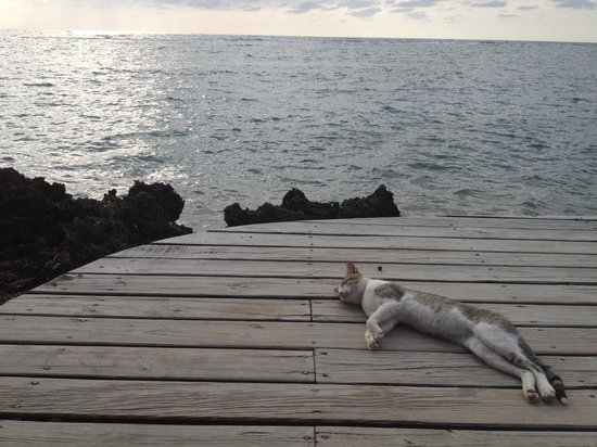 Las Rocas Resort & Dive Center: Alonzo Chillin'