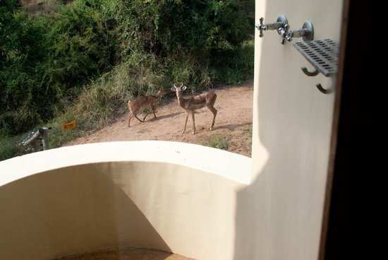 Shishangeni Lodge: Impala near the outdoor shower
