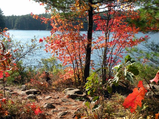 Quality Inn & Suites: High Falls Trail ~ Algonquin Park
