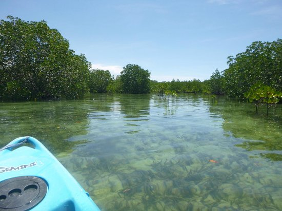Dos Palmas Island Resort &amp; Spa: Kayaking in mangroves around island