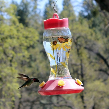 Groveland, Californië: Hummingbirds