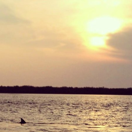 Sanibel Harbour Marriott Resort & Spa: Dolphin at sunset