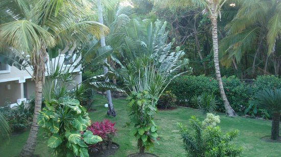 Dreams Palm Beach Punta Cana: View from Balcony, 2nd floor room 7215