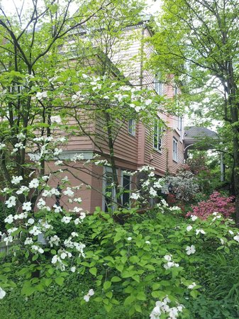 ‪‪Beaufort House Inn‬: Side of house with delightful shrubs‬