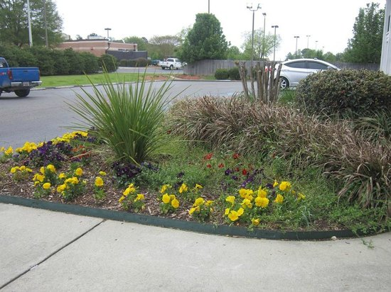 Cheraw, SC: pretty flowers and shrubbery outside lobby