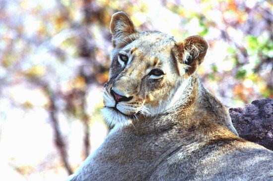 Timbavati Private Nature Reserve, Sdafrika: Aren&#39;t I pretty ?