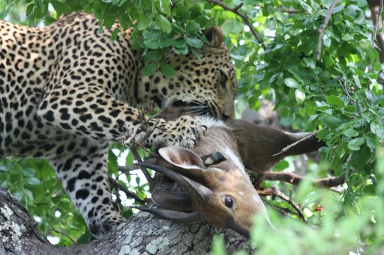 Savanna Private Game Reserve: Dinner is Served