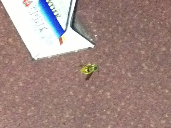 This is the bee that stung my friend at the Neshaminy Inn, they told us it was NOT their respons