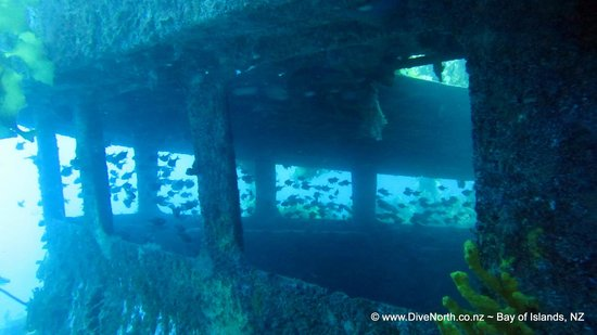 Kerikeri, New Zealand: Wreck diving at its' finest