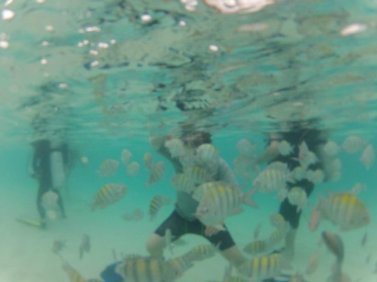 East End, St. Thomas: Frenetic Feeding Fish Frenzy