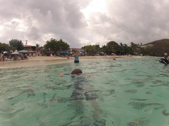 East End, St. Thomas: Fun with Fish at Coki