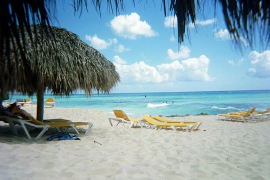 Viva Wyndham Dominicus Palace : the beach