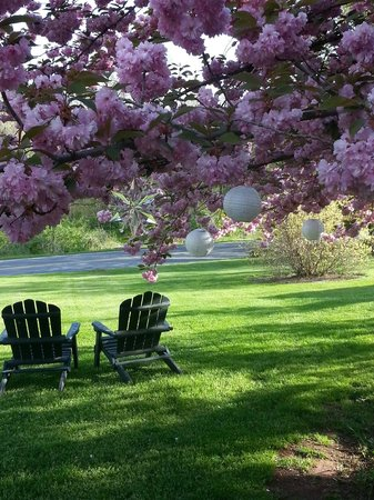 Adamstown, Pensilvania: Sitting under The Cherry Tree