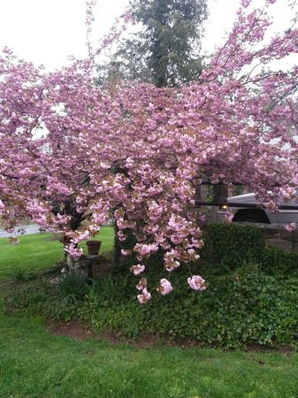 Adamstown, Pensilvania: The Cherry Tree