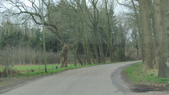 Veenendaal, Países Bajos: Road through the woods to the hotel