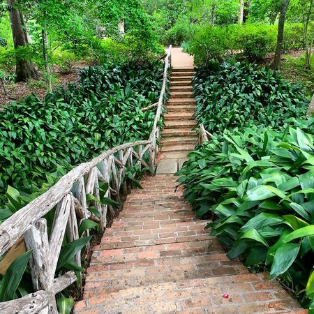 Butterfly Garden Picture Of Bayou Bend Collection And