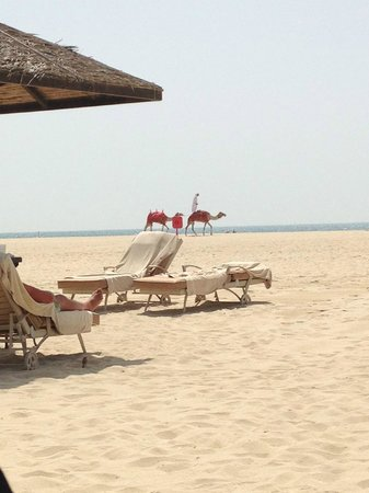 Le Royal Meridien Beach Resort & Spa: Balancing on a camel