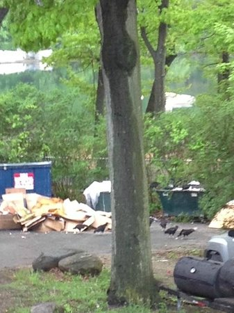 Bear Mountain Inn: This horrible garbage heap was the view from the Blue Room/Tapas bar....complete w/turkey vultur