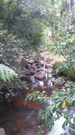 North Tamborine, Avustralya: peace and tranquility