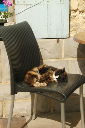 Vertheuil, Francja: Sweet kitty cat on property