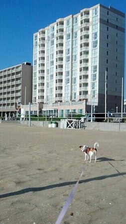 Residence Inn Virginia Beach Oceanfront : view of hotel from the beach 