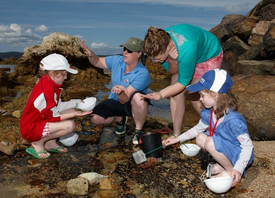 Eden, : Marine Scientist showing visitors life on the local shores
