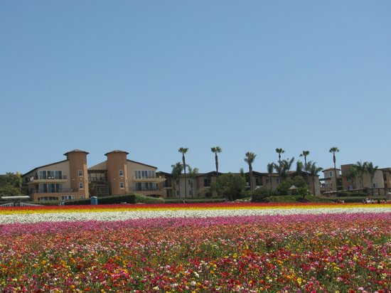 Grand Pacific Palisades Resort and Hotel: Resort as seen from Flower Fields
