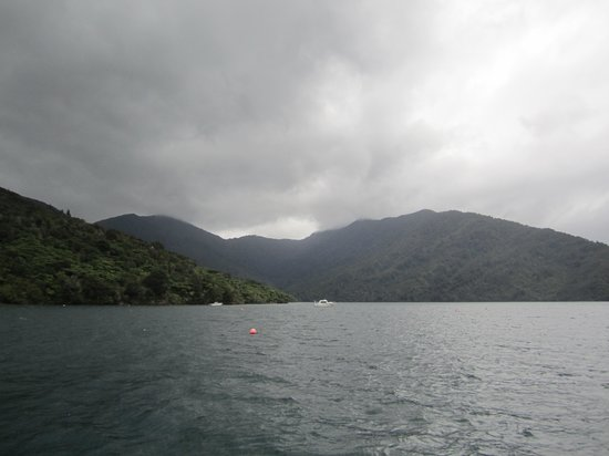 Picton, Neuseeland: Beautiful Scenery on Queen Charlotte Sound