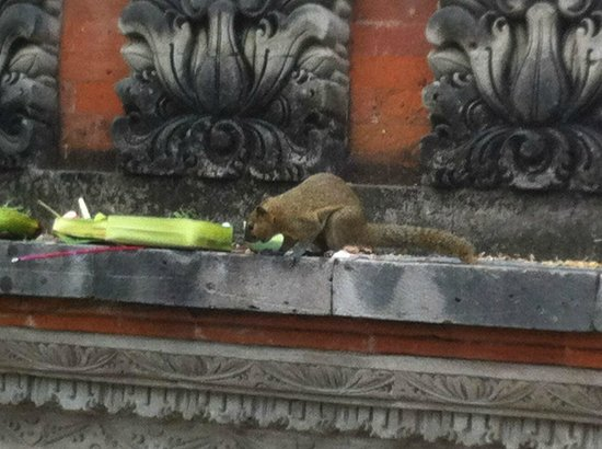 Bali Mandira Beach Resort & Spa: Cute squirrel eating from offerings, naughty