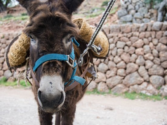 Hotel La Residencia by Orient-Express : Donkeys living at hotel