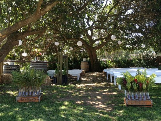 Bredasdorp, South Africa: Wedding Veremony under the Milkwood tree