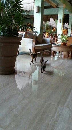 Grand Palladium White Sand Resort & Spa: cats in the lobby