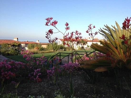 Terranea Resort: Morning view