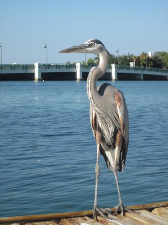 Whispers Resort at Treasure Island: Blue heron