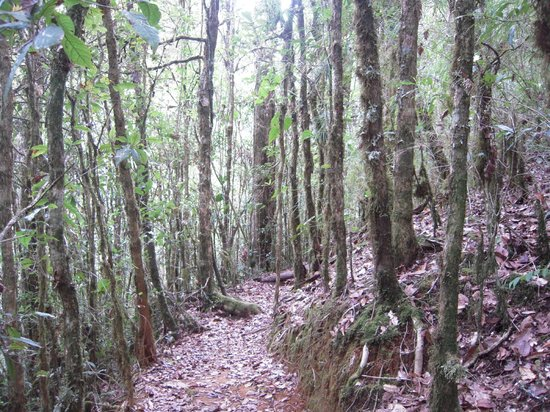 San Gerardo de Dota, Costa Rica: Hiking on the grounds