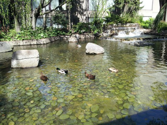 Hilton Montreal Bonaventure: Roof-top garden with duck pond