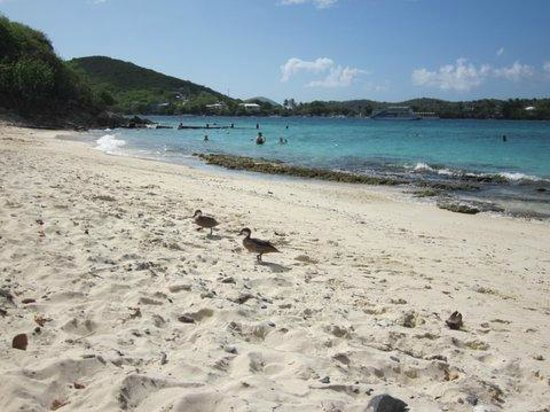 Sugar Bay Resort & Spa: ducks on the beach
