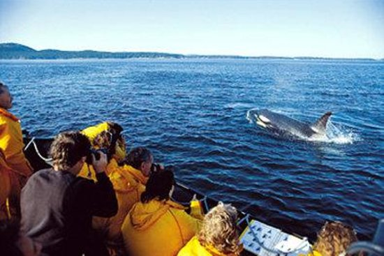 BEST WESTERN PLUS Carlton Plaza Hotel: Whale Watching